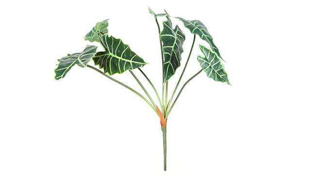 Alocasia Artificial Plant (Green) by Urban Ladder - Front View Design 1 - 314890