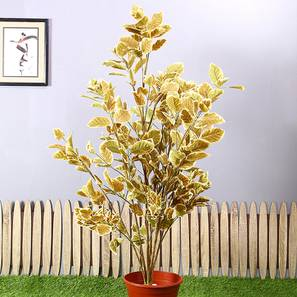 Wild Coffee Artificial Plant (Yellow) by Urban Ladder - Design 1 - 314895