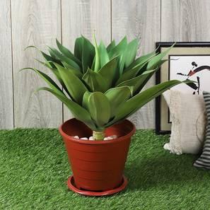 Foxtail agave large artificial plant lp