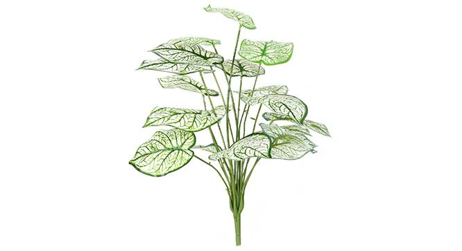 Caladium Artificial Plant (White) by Urban Ladder - Front View Design 1 - 314955