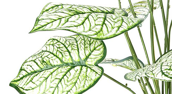 Caladium Artificial Plant (White) by Urban Ladder - Design 1 Side View - 314956