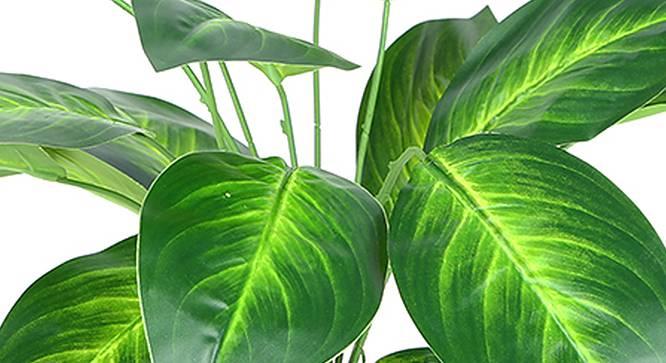 Dieffenbachia Artificial Plant (Green) by Urban Ladder - Design 1 Side View - 314966