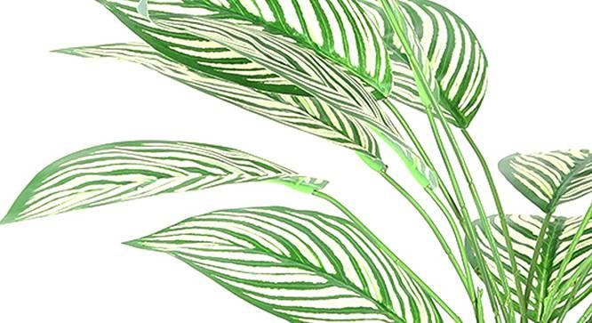 Dieffenbachia Artificial Plant (White) by Urban Ladder - Design 1 Side View - 314972