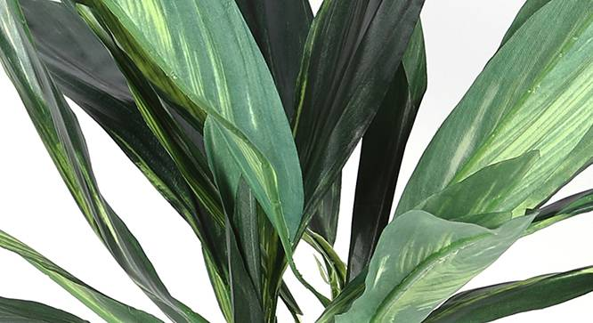 Dracaena Artificial Plant (Green) by Urban Ladder - Design 1 Side View - 314977