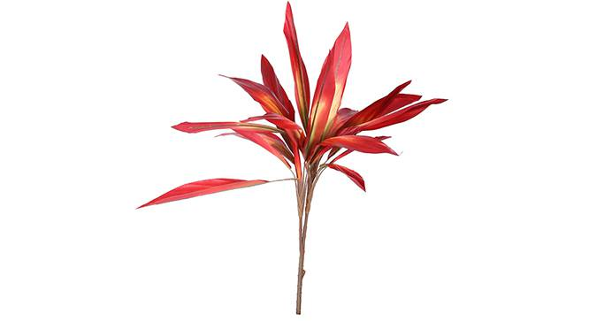 Dracaena Artificial Plant (Red) by Urban Ladder - Front View Design 1 - 314985
