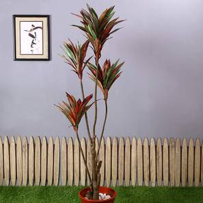 Dracaena Tall Artificial Plant (Red and Green) by Urban Ladder - Design 1 - 314996