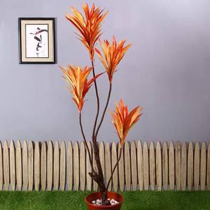 Dracaena Tall Artificial Plant (Orange) by Urban Ladder - Design 1 - 314999