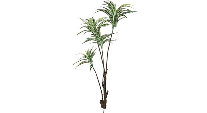 Dracaena Tall Artificial Plant (White) by Urban Ladder - Front View Design 1 - 315006