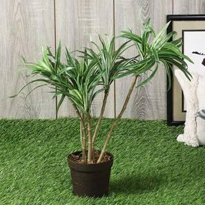 Halape artificial plant lp