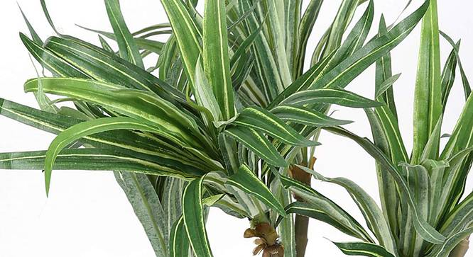 Halape Artificial Plant (Green) by Urban Ladder - Design 1 Side View - 315031