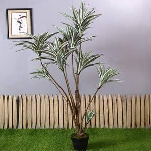Fernaldi artificial plant lp