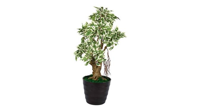 Ficus Artificial Plant (White) by Urban Ladder - Design 1 Side View - 315043