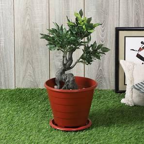 Lacun green artificial plant lp