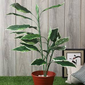 Jones artificial plant lp