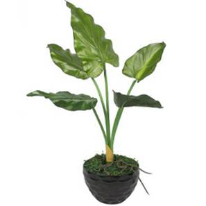 Andro artificial plant lp