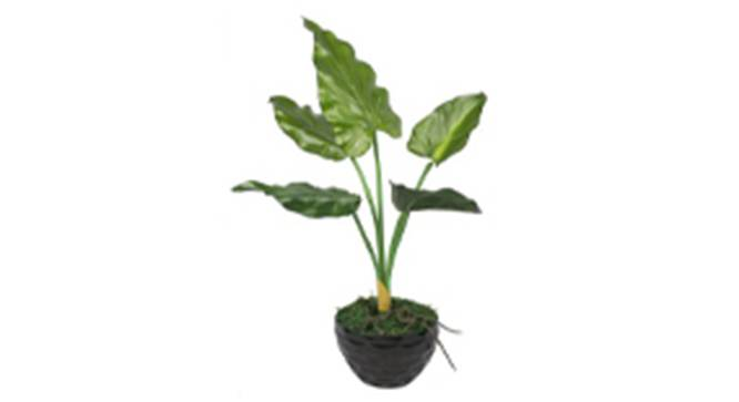 Andro Artificial Plant (Green) by Urban Ladder - Front View Design 1 - 315099