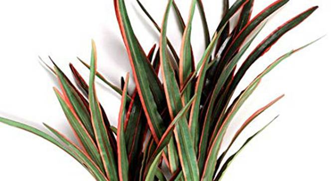Elliot Artificial Plant (Red) by Urban Ladder - Design 1 Side View - 315136