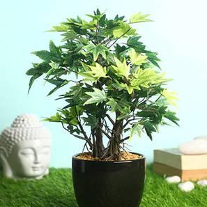 Acer green artificial plant lp