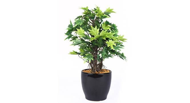 Acer Artificial Plant (Green) by Urban Ladder - Front View Design 1 - 315153