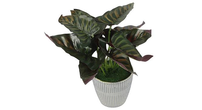 Capre Artificial Plant by Urban Ladder - Design 1 Side View - 315268