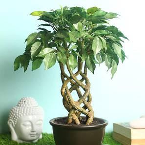 Thon green artificial plant lp