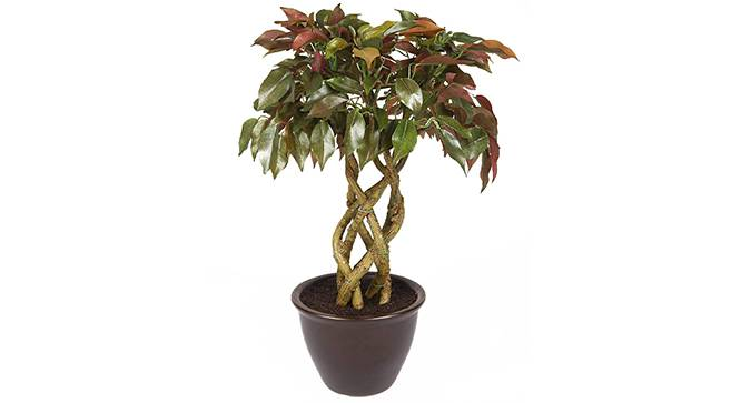 Thon Artificial Plant (Red) by Urban Ladder - Front View Design 1 - 315290