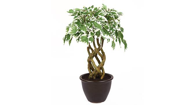 Thon Artificial Plant (White) by Urban Ladder - Front View Design 1 - 315293