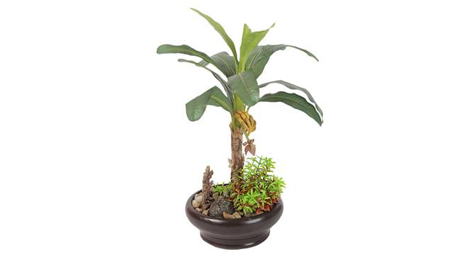 Denro Artificial Plant (Green) by Urban Ladder - Design 1 Side View - 315297