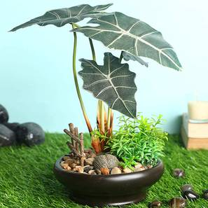 Costa artificial plant lp
