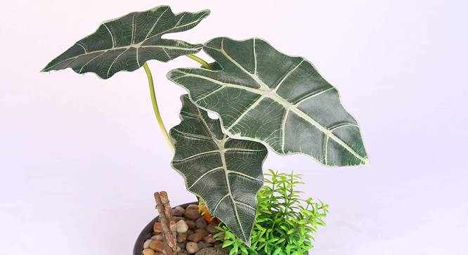 Costa  Artificial Plant (Green) by Urban Ladder - Design 1 Side View - 315300