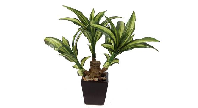 Kirk Artificial Plant (Green) by Urban Ladder - Front View Design 1 - 315326