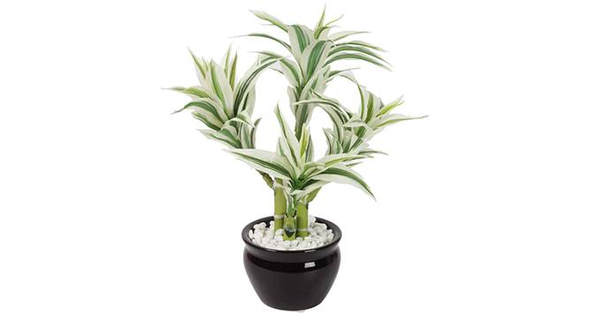 Yucci Artificial Plant (White) by Urban Ladder - Front View Design 1 - 315332