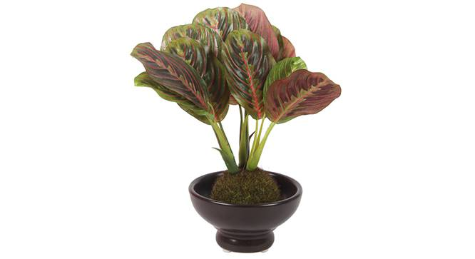 Walter Artificial Plant (Red) by Urban Ladder - Front View Design 1 - 315344