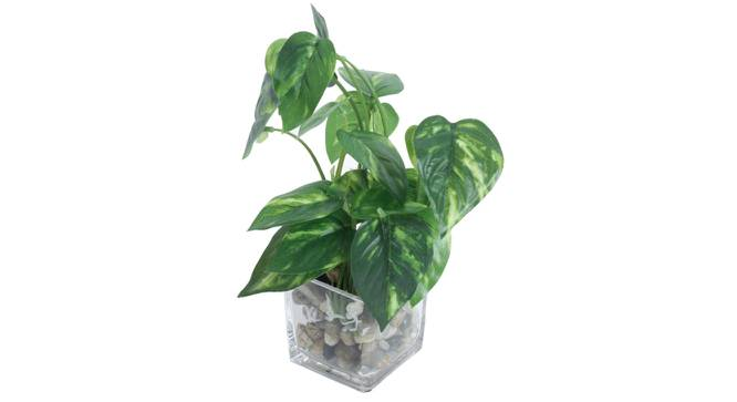 Sara Artificial Plant With Pot (Green) by Urban Ladder - Front View Design 1 - 317832