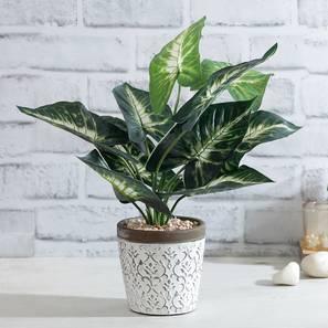 Artificial plant lp