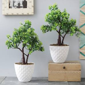 Asher Artificial Plant by Urban Ladder - Design 1 Details - 324129