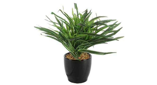 Cooper Artificial Plant With Pot (Black) by Urban Ladder - Front View Design 1 - 325650