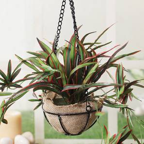 Green artificial plant with pot lp