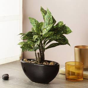 Steve Artificial Plant With Pot (Black) by Urban Ladder - Design 1 - 325795