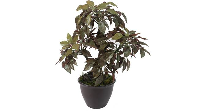 Albert Artificial Plant (Red) by Urban Ladder - Front View Design 1 - 330464
