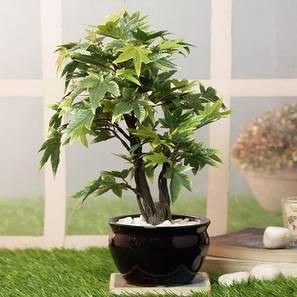 Triga green artificial plant lp