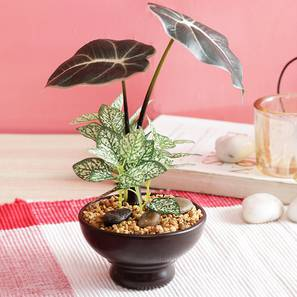 Broad zebra artificial plant lp