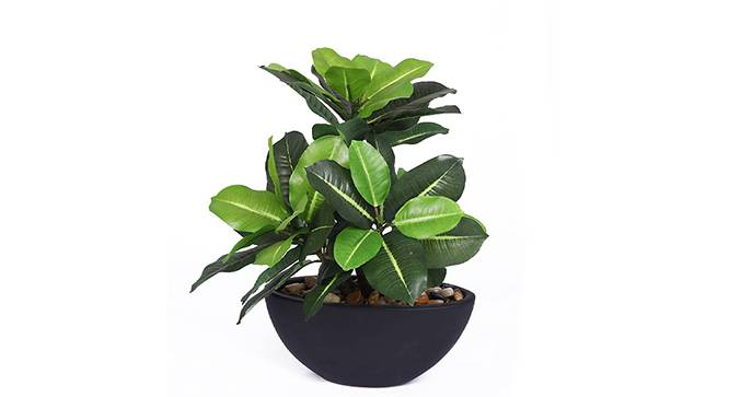 Rosta Artificial Plant (Black) by Urban Ladder - Front View Design 1 - 330494