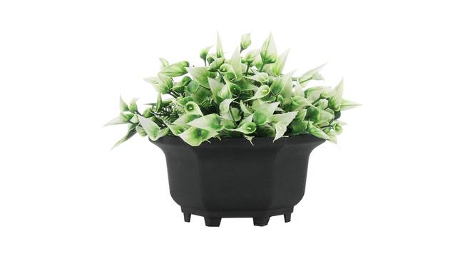 Honor Artificial Plant by Urban Ladder - Front View Design 1 - 335416