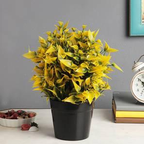 Blanche artificial plant black lp
