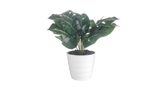 Cosima Artificial Plant by Urban Ladder - Front View Design 1 - 337720