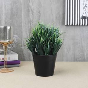 Ispen artificial plant black lp