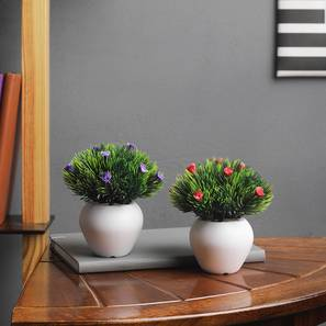 Maxima Artificial Plant by Urban Ladder - Front View Design 1 - 337789