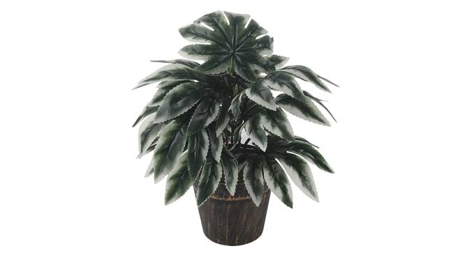 Roxanne Artificial Plant by Urban Ladder - Front View Design 1 - 337932